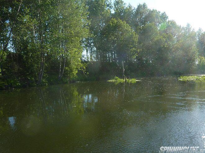 Изображение 1 : Крупный голавль малых рек